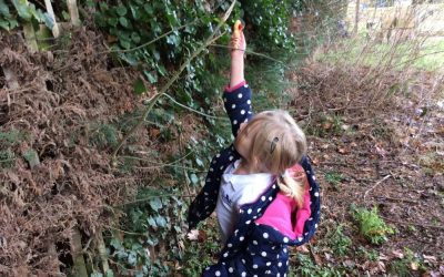 Bird Feeders & Birdwatch
