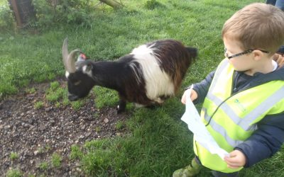 Kingfisher class visit Hall Farm
