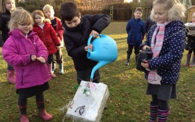 Woodpeckers Test their Junk Model Lunchboxes!