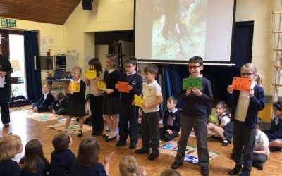 Owls Assembly